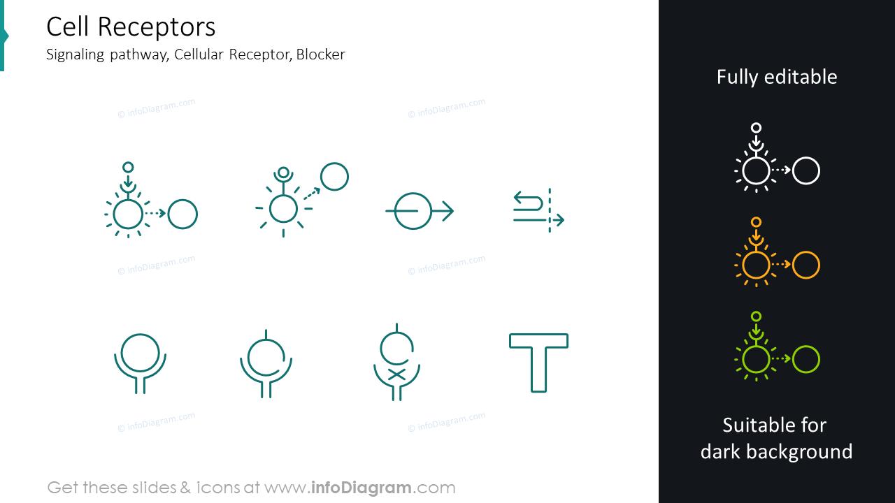 Cell receptors icons: signaling pathway, cellular receptor