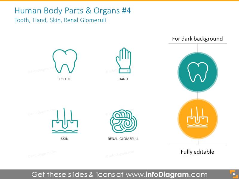 Human and parts and organs: tooth, hand, skin, renal glomeruli