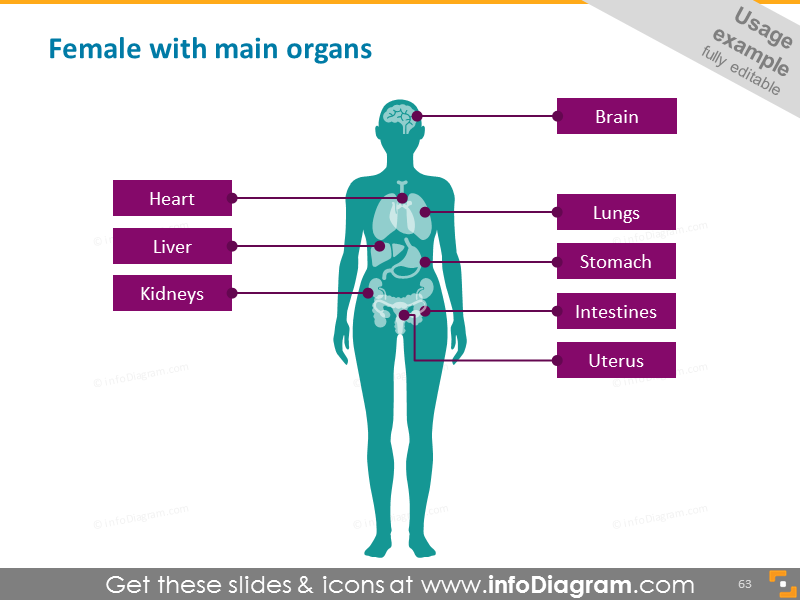 Medical icon female silhouette organs PowerPoint clipart