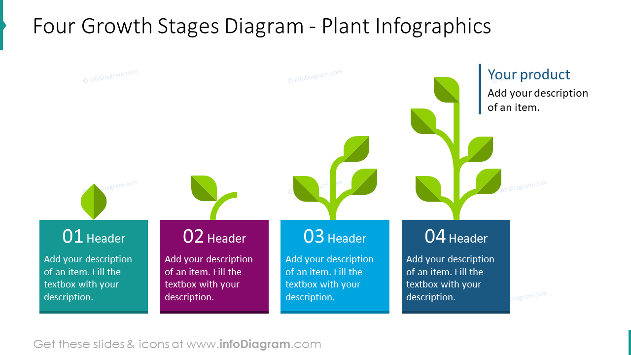 Four growth stages diagram