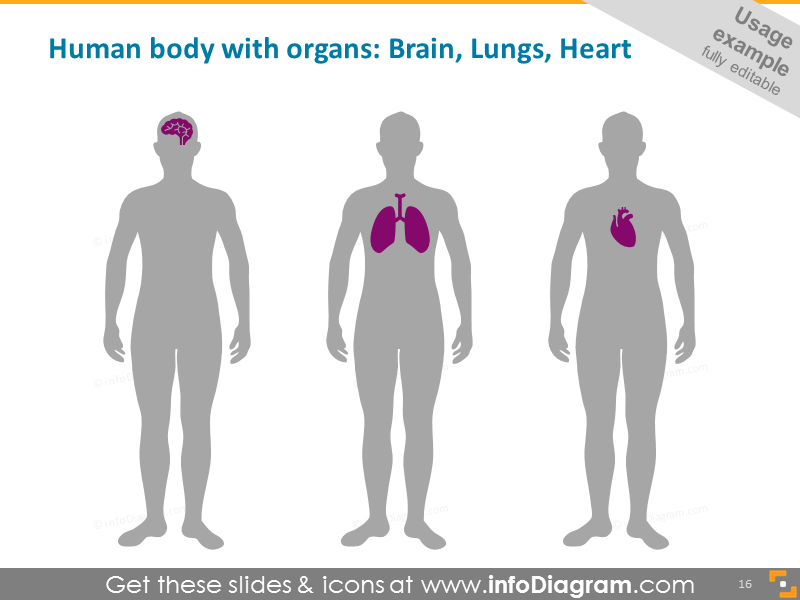 Human Body with Organs Infographics: Brain, Lungs, Heart
