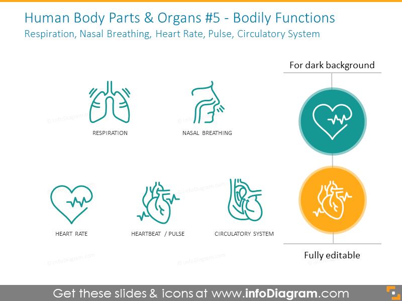 functions: respiration, nasal breathing, heart pulse, circulatory system
