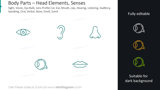 Head elements graphics: senses sight, vision, eye bulb, profile cut