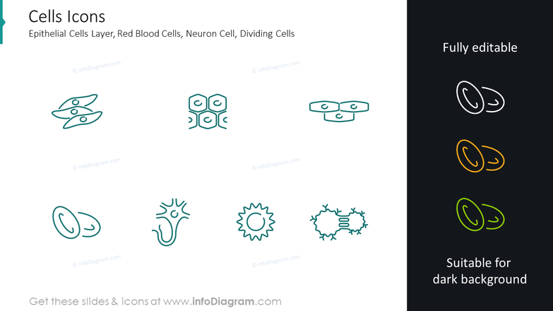 Cells icons: epithelial cells layer, red blood cells