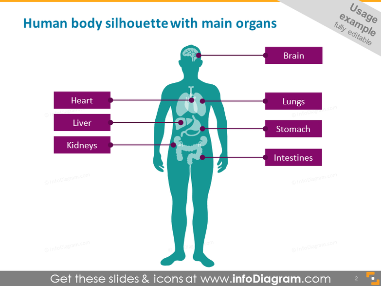 human body silhouette with main organs
