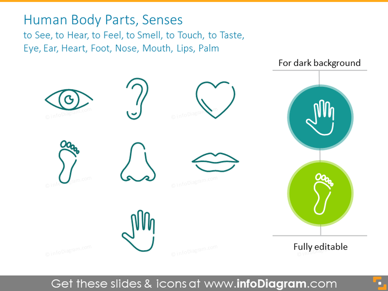Human body outline symbols: Eye, Ear, Heart, Foot, Nose,Lips,