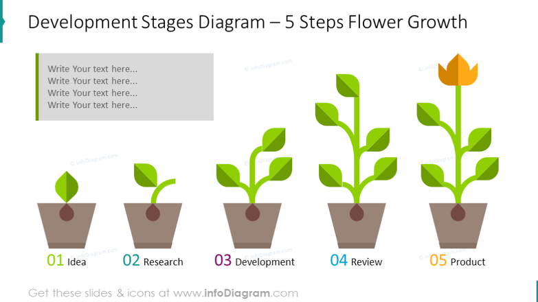Example of development stages diagram illustrated in 5 steps flower growth